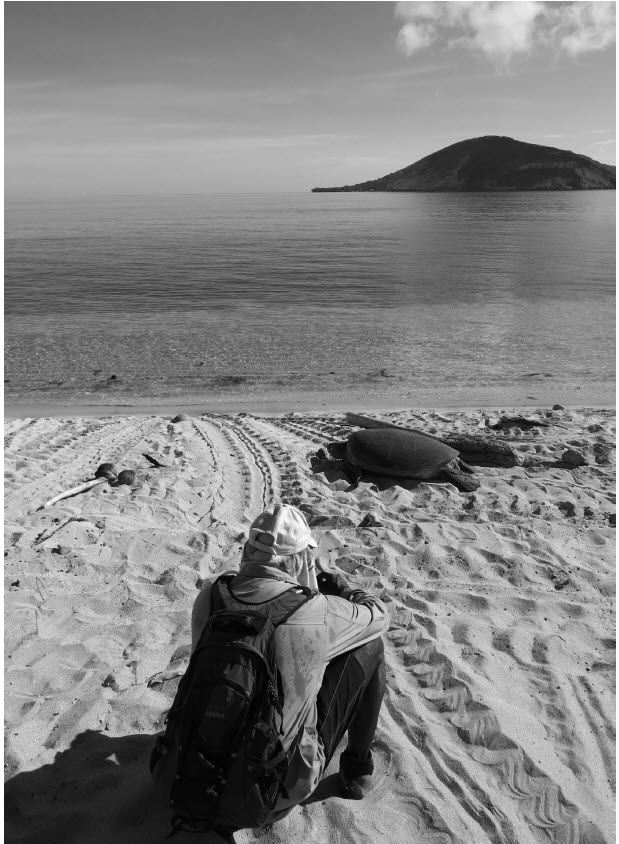 a photograph of John Wigness observing nesting turtle, Dauar Island