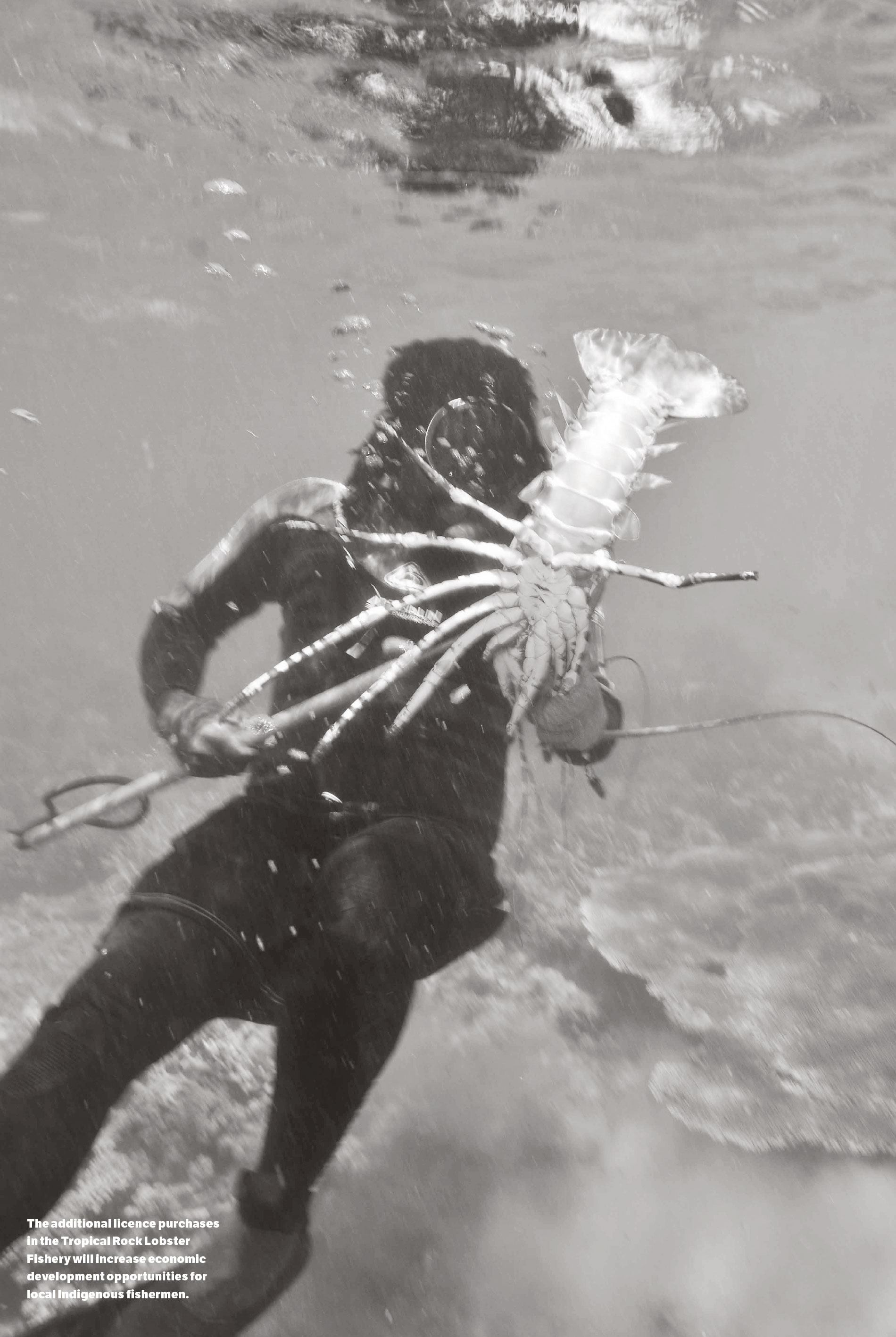 a photo of local Indigenous fishermen catching a lobster.