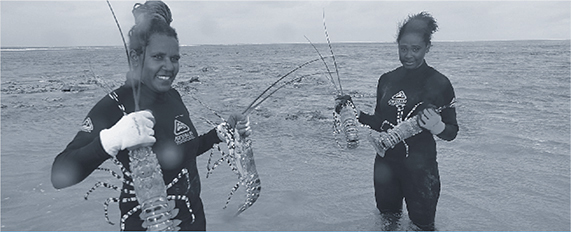 a photograph tropical rock lobster fishers from warraber