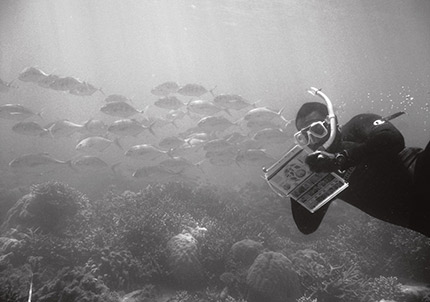 A Photograph of a diver underwater, surrounded by fish