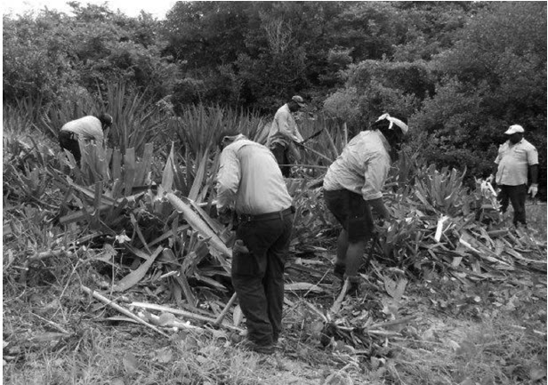 a photograph of Rangers clearing Manilla rope, Dauan
