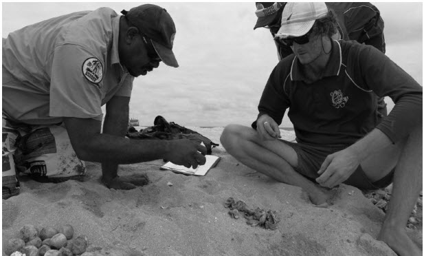 a photograph of Clutch excavation, TSRA rangers on Bramble Cay